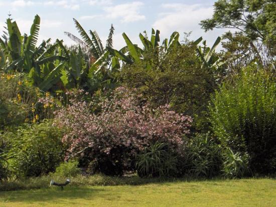 Quinta da Casa Branca: Gardens from room
