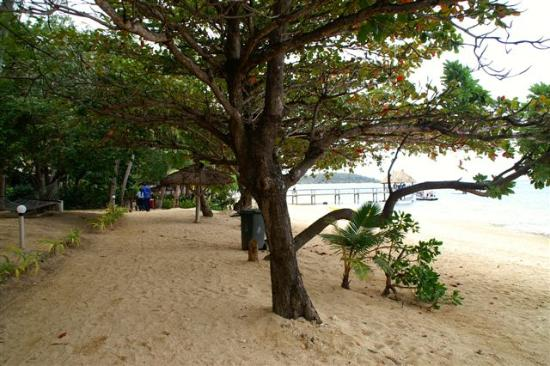 Malolo Island Resort: Path in front of bure looking towards from the main jetty