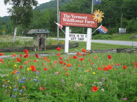 vermont wildflower farm picture of vermont wildflower farm