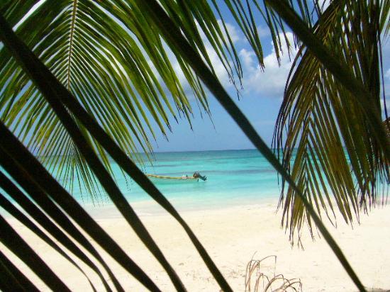 La Romana, Dominican Republic: les feuille du paradis