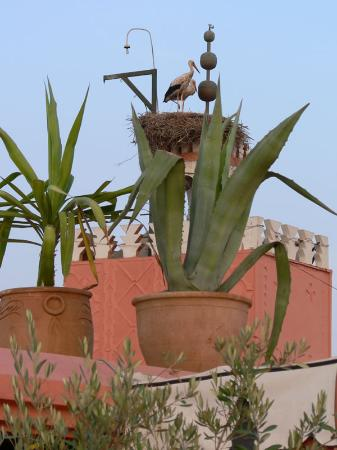 Riad Dar Anika: Even the Muezzin can't shift these storks.