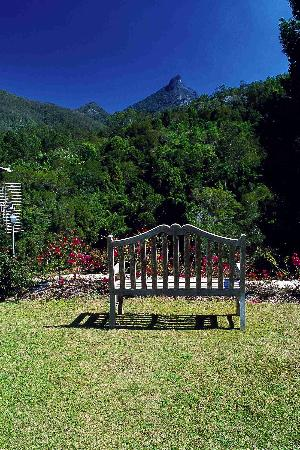 Amazing Wollumbin Palms Retreat at Mt Warning: This is the view from the front of our lodge.  Awesome!