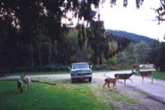 Kokanee Chalets: Deer