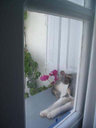Ikies - Traditional Houses: a little friend in our window