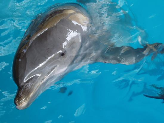 CiCi Acapulco Magico : CiCi Water Park Dolphin - pool 1