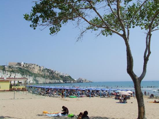 Hotel Mediterraneo : Beach at Vieste