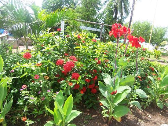 Playa Carrillo, Costa Rica: The Gardens at Hotel Esperanza