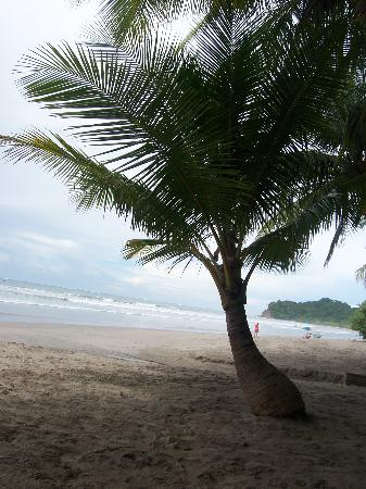 Playa Carrillo, Costa Rica: The Beach at Carrillo