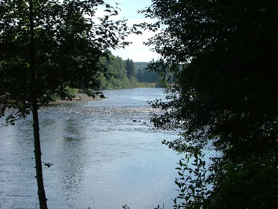 Quillayute River Resort: View of the River from the Resort