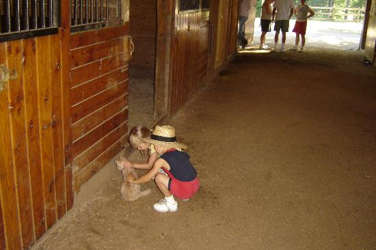 Shenandoah Crossing: The kids, butters the kitten, and a very clean horse barn.