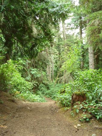 Einers Above Race Rocks Bed and Breakfast: Sooke Regional Park Forest Trail