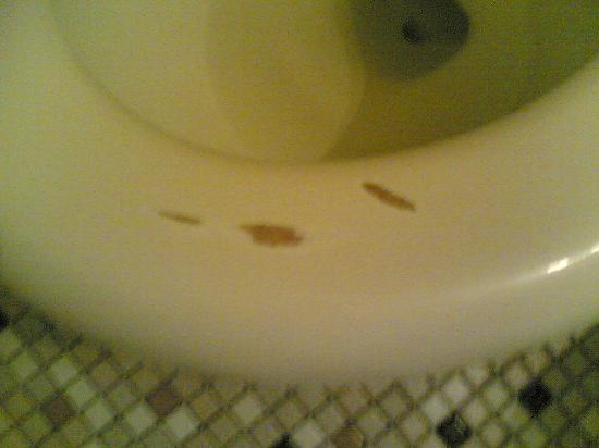 Isle of Palms Motel: Toilet seat can't be sanitized when surface worn off