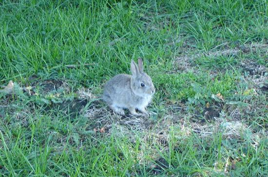 SilverWood Hotel & Conference Center: One of the many baby rabbits