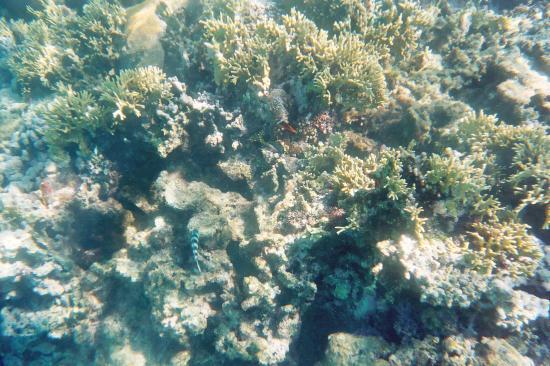 Nukubati Private Island: We Found Nemo!!