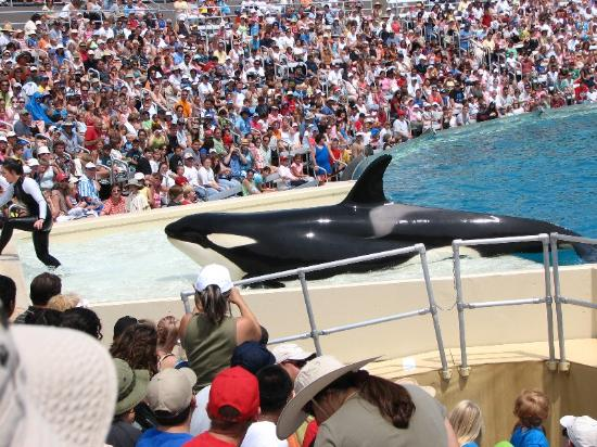 Residence Inn San Diego Mission Valley: Shamu Believe Show
