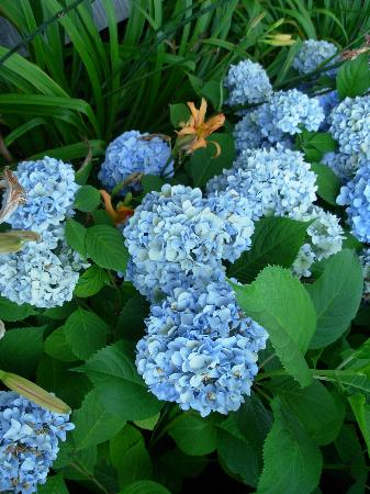 Mill House Inn : Beautiful Flowers Everywhere