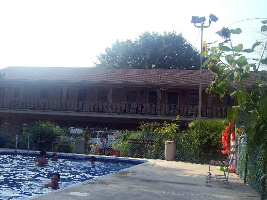 White Rose Motel: View of Motel from pool deck. Pool hidden very well from road. Sunflowers are huge and...