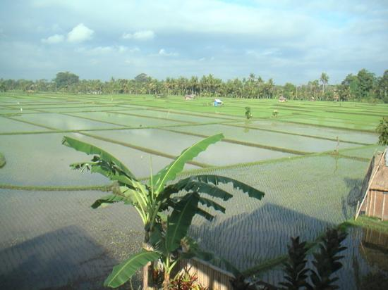 Tegal Sari: Rice fields view from room # 24