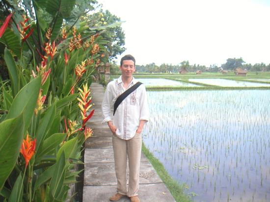 Tegal Sari : Walking along rice fields