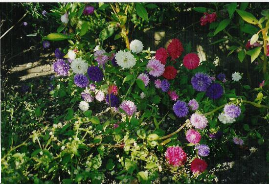 Pension Schlosserhof: flowergarden