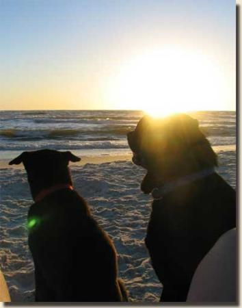 Bear and Peanut enjoying a sunset--the Cape San Blas Beaches face West for a romantic sunset...