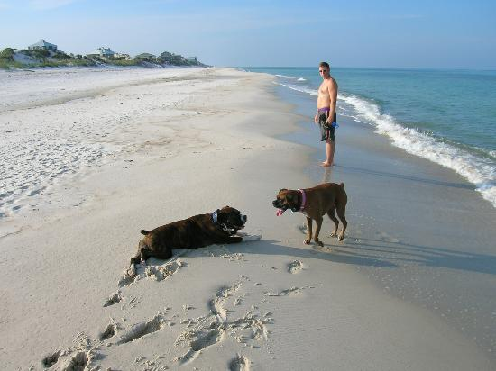 Your Dog Can Always Make A Friend Or 2 On The Cape San Blas Florida Beaches