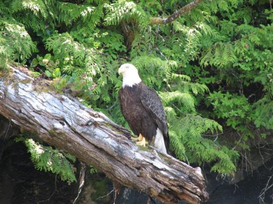 King Pacific Lodge: A welcome visitor at our lunch