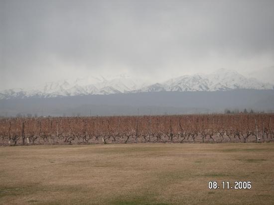 B&B Plaza Italia: the vineyard