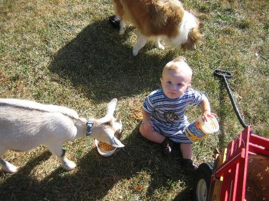 Country Vistas: Even the little kids can get involved