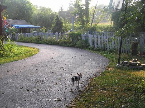 Olde Fogie Farm: morning view with Muffin