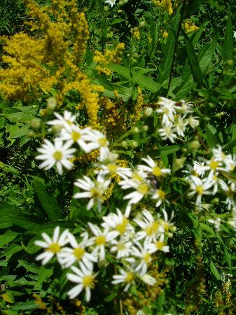 Big Intervale Fishing Lodge : flowers outside our cabin door
