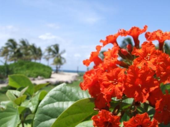 Nisbet Plantation Beach Club : Flowers everywhere!