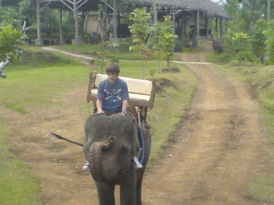คูตา, อินโดนีเซีย: Elephant Ride