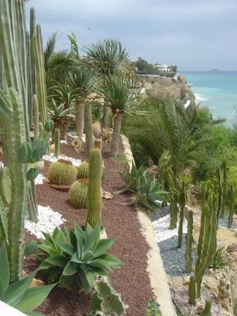 Hotel Servigroup Montiboli: Cactus garden!