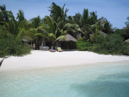 Nika Island Resort: Beach and visiting fish