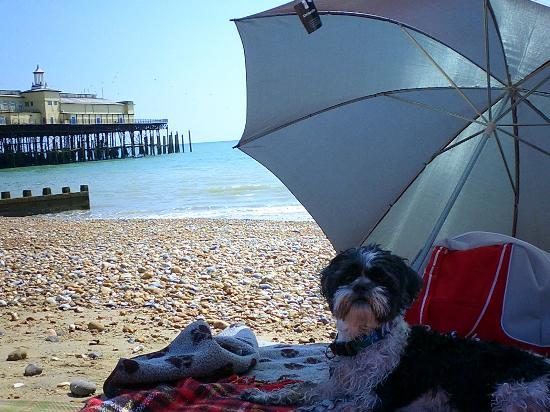 Alfie on the beach opposite White Rock Hotel