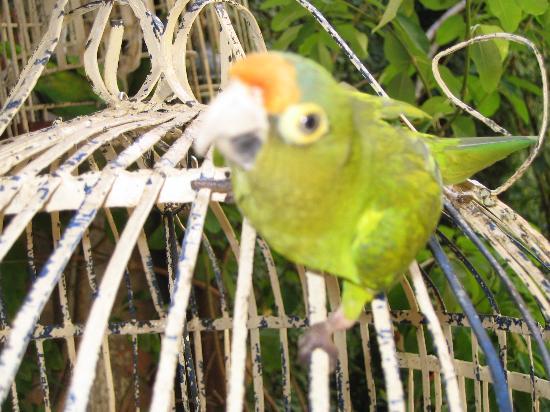 Casa San Francisco: One of several resident birds