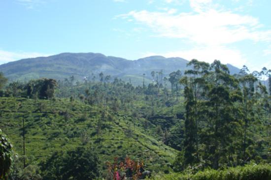 Ceylon Tea Trails - Relais & Chateaux: Hills Behind