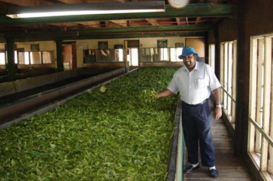 Ceylon Tea Trails - Relais & Chateaux: 'Mr Jeremy' & The Tea Factory