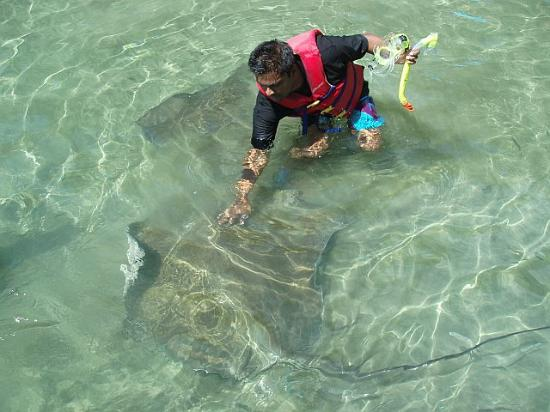 Crown Point Beach Hotel: Petting sting rays on a secluded beach