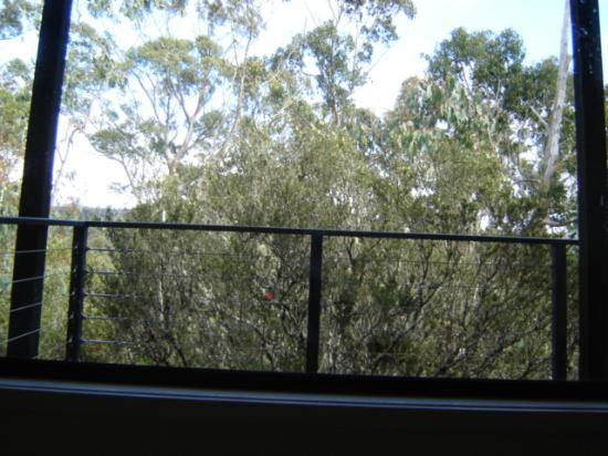 Cradle Mountain Wilderness Village: view from spa