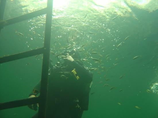 Xibalba Dive Center: Booger fish..