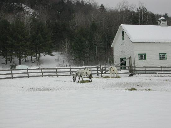 Three Stallion Inn: Horses in back of Inn