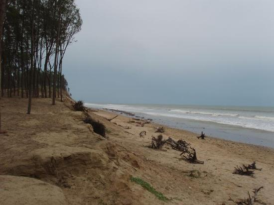 Shankarpur, Indien: Beach and the tree stumps - you can hardly walk without tripping