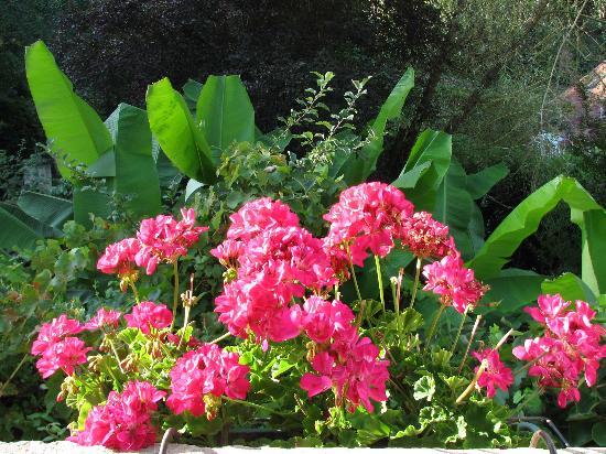 Снимок Le Jardin Sarlat