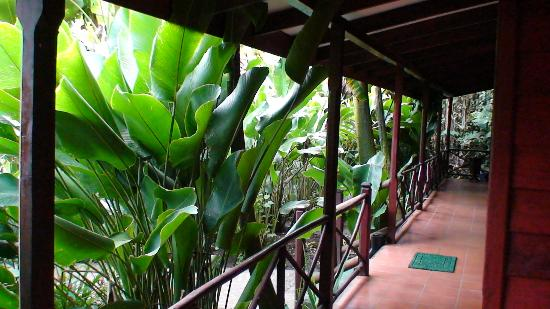 Pachira Lodge: Outside our room