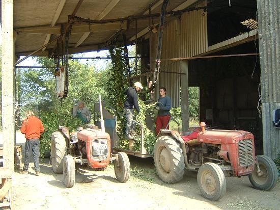 Foxbrush Barn: hop harvest