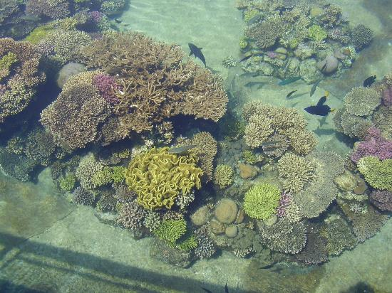 U Suites Eilat: Coral at Dolphin Reef