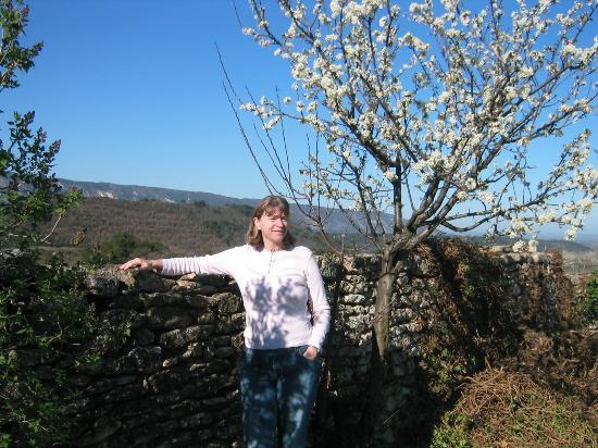 Le Mas Des Ozieres : The garden view