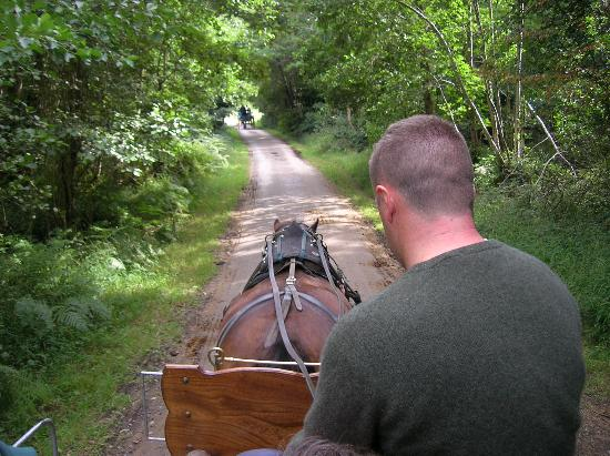 Kilburn House Farmhouse Bed and Breakfast : Jaunting Cart Ride in the National Park